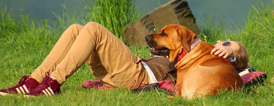 Gewinnspiel: Hunde barfen und Herr Doktor, mein Hund hat Migräne!