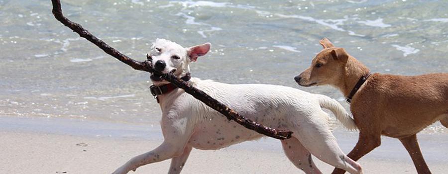 Gewinnspiel: Ich, Lilly: Vom Glück, ein Hund zu sein und Bärenklau: Exkommissar Bösenschreck ermittelt