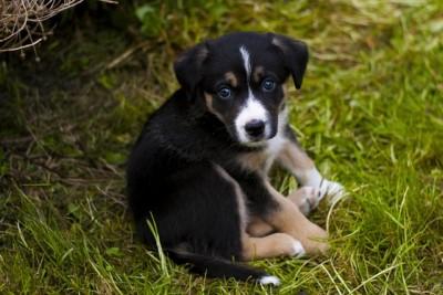 Was sollte bei der Wahl des Hundefutters vermieden werden?