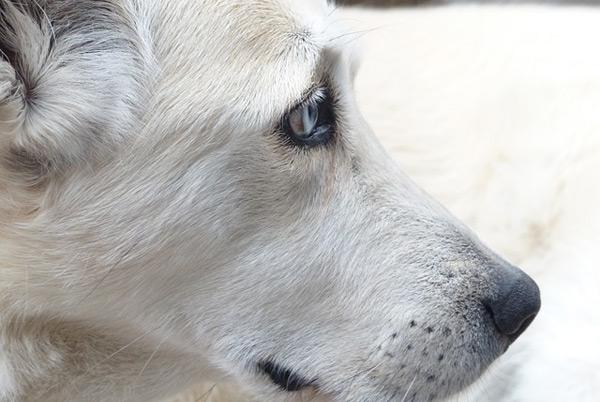 Was macht gutes Hundefutter aus?