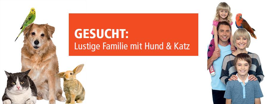 Gesucht: Lustige Familie mit Hund & Katz