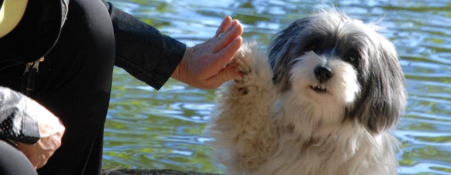 """10 Fragen an Biggi Lechtermann, Autorin von """"Danke, Dog!"""""""