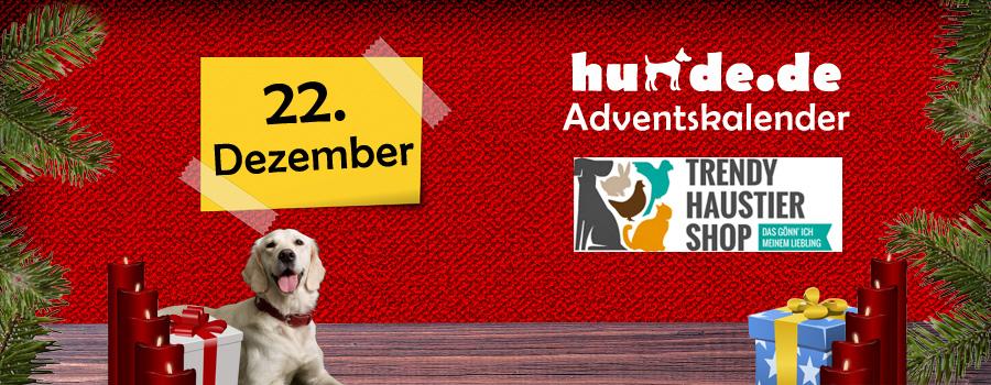 22. Dezember: Hundekissen von Lief! Lifestyle