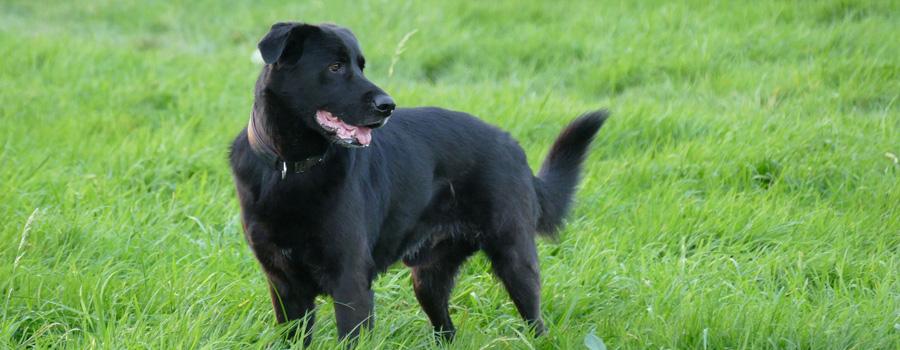 Wichtige Änderungen bei der Hundesteuer
