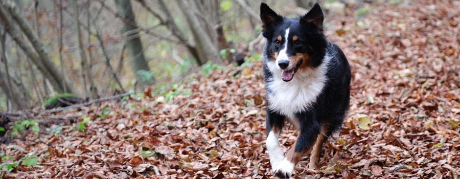 Positive Eigenschaften des Schwarzkümmelöls für Hunde