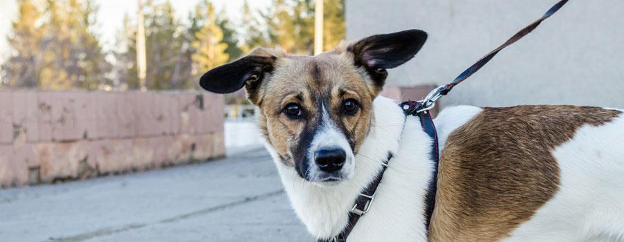Hunde verstehen: Tipps für Hundeerziehung und Hundesprache