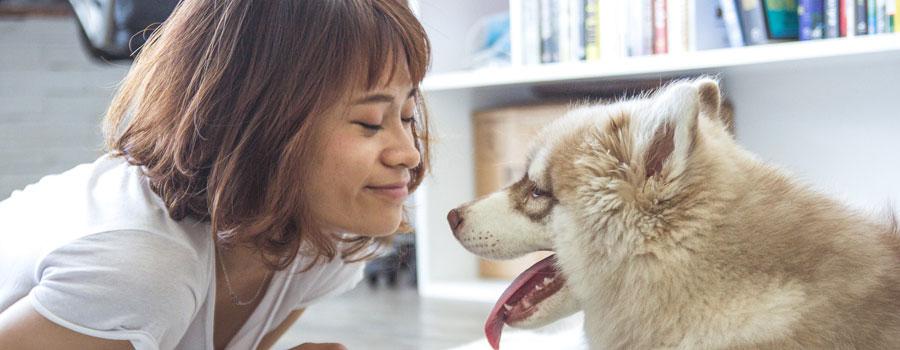 Hundeallergie: Wenn beim Streicheln plötzlich die Nase juckt