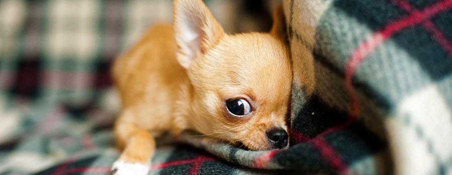 Familienzuwachs - Hund: Worauf sollte man achten?