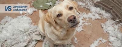 Welche Versicherungen schützen meinen Hund?