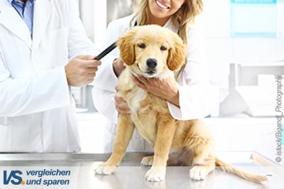 Hunde-OP-Versicherung – Schutz für den Notfall