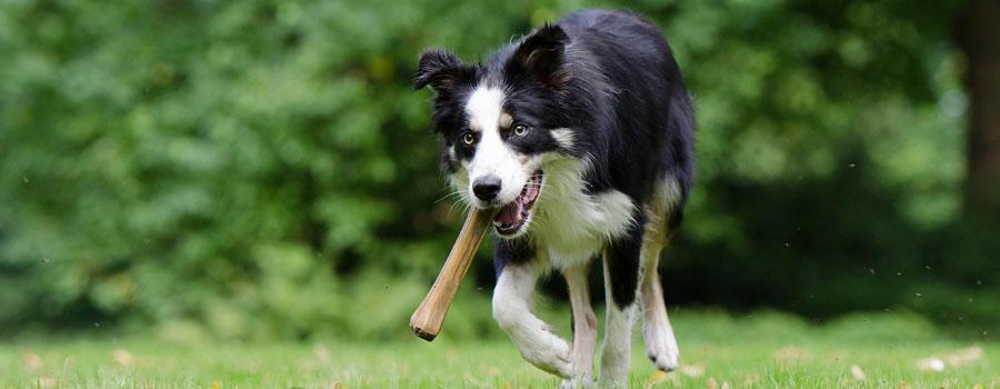 Bedarfsgerechte Ernährung für den Hund