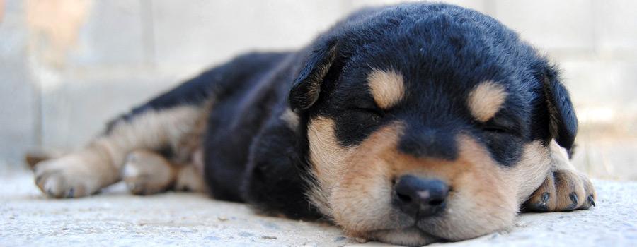 FOTOAKTION: Schlafende Hunde soll man nicht wecken…