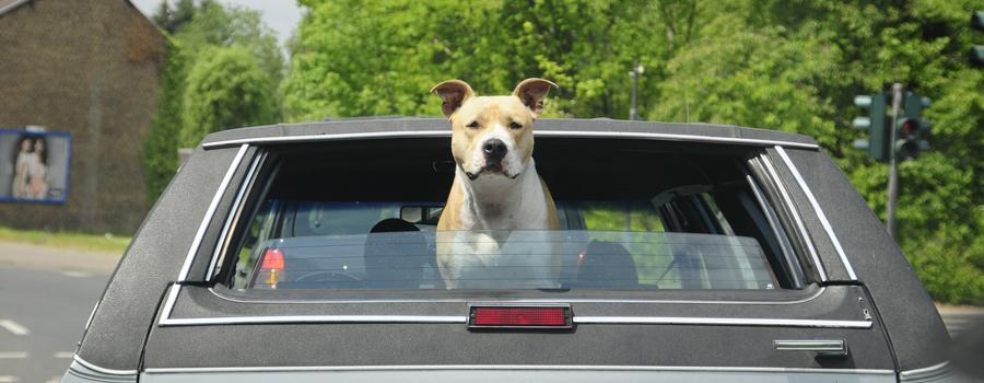 Hundeboxen nach Maß