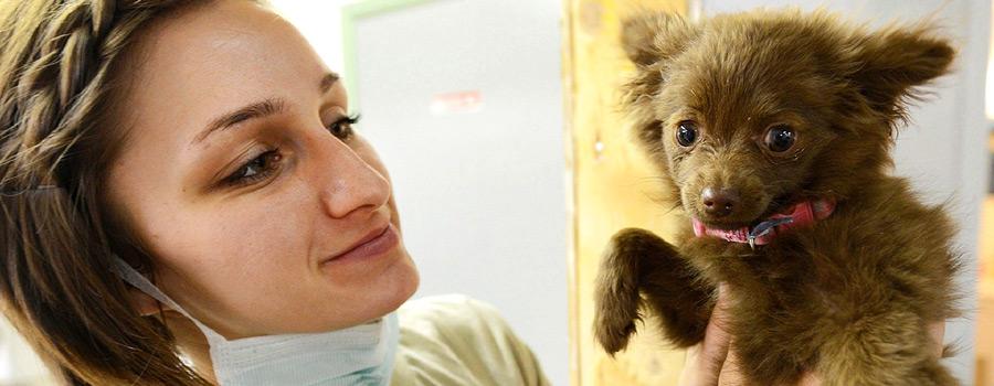 Gewinnspiel: Keine Angst beim Tierarzt