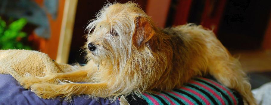 Haut- und Fellgesundheit von Hunden