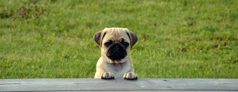 Hundepullover im Trachtenstrick
