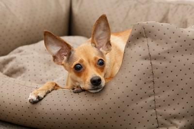 Ideengeberin für Tierschutz-Shop war Mira