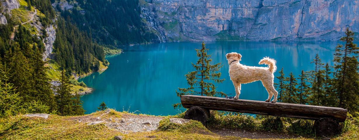 Wandern mit Kind und Hund – eine Checkliste