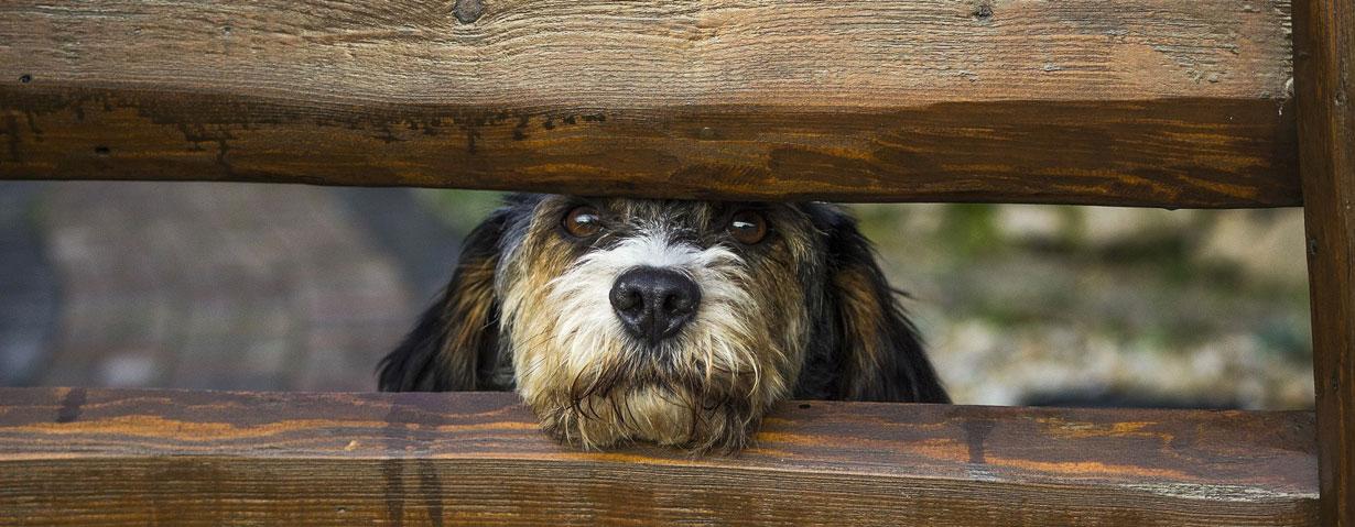 Der Hund auf dem eigenen Grundstück