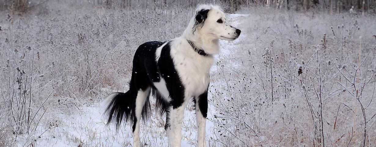 Hunde im Winter vor Unterkühlung schützen