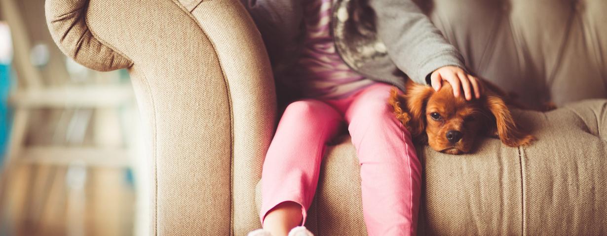 Die TOP-Hunderassen und Haustiernamen im Jahr 2016