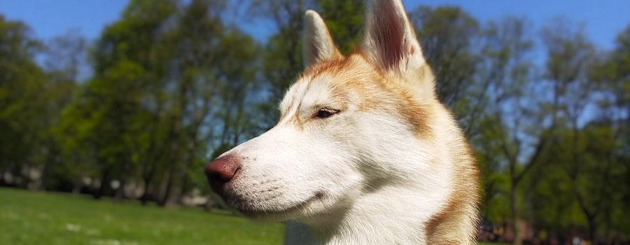 Hundepfeifen für effektives Training