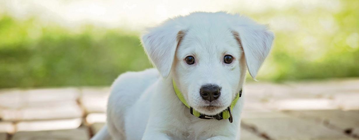 Hundehalterhaftpflicht abschließen: Das sollte man wissen
