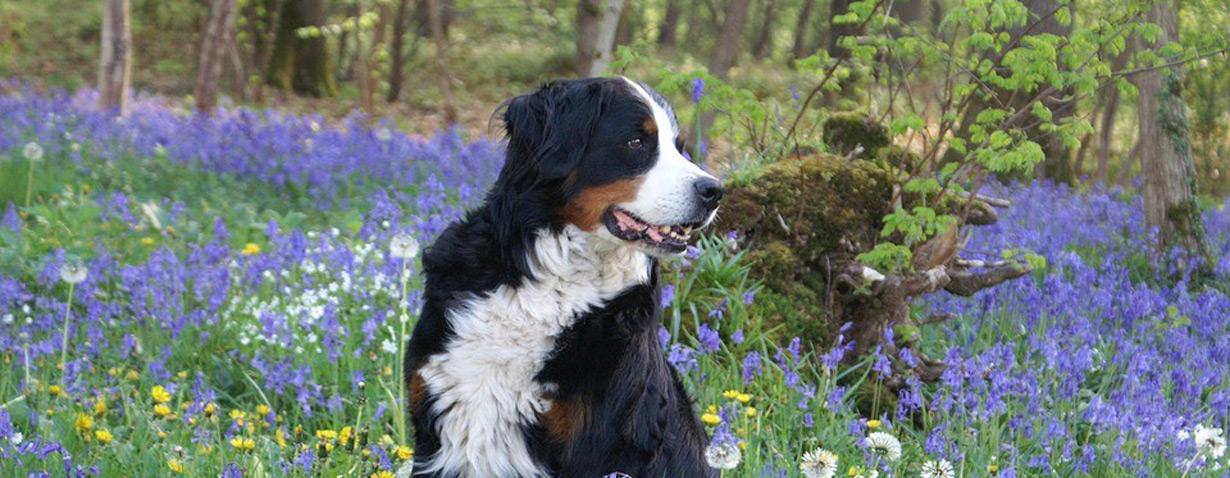 Hundetipps im Frühling
