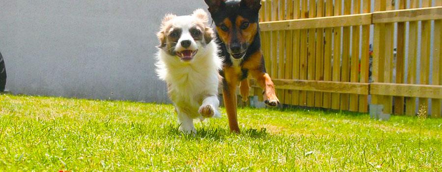 Sicherer Garten dank Hundezaun