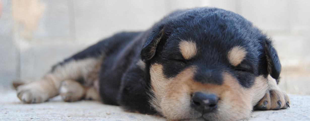 Geben Sie Ihrem Haustier Wärme und Geborgenheit mit  Thermoplace