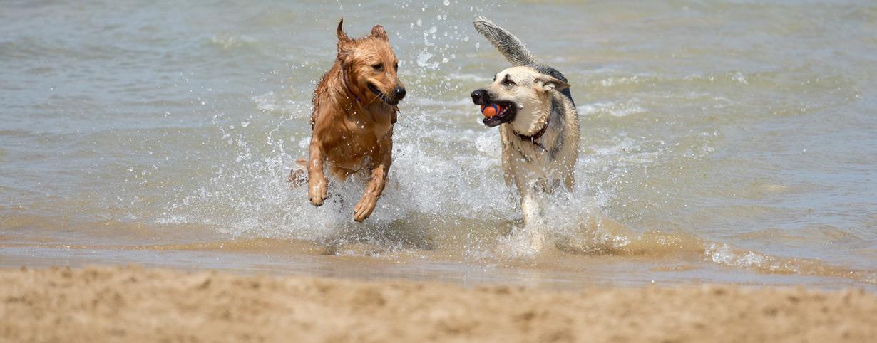 Urlaub mit dem Hund in Dänemark
