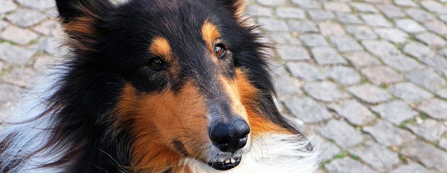 pixabay_dog-1272880_1280
