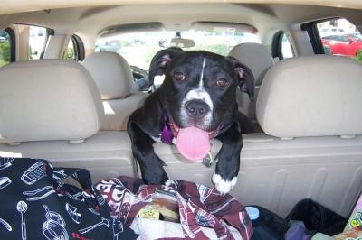 Wie der Hund im Wohnmobil am besten transportiert wird