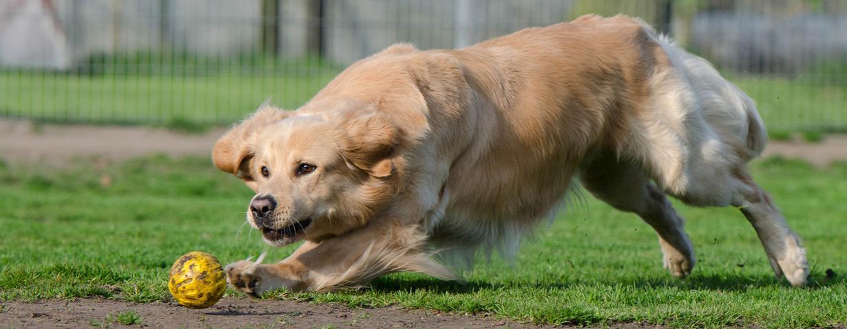 Ballspiele mit dem Hund