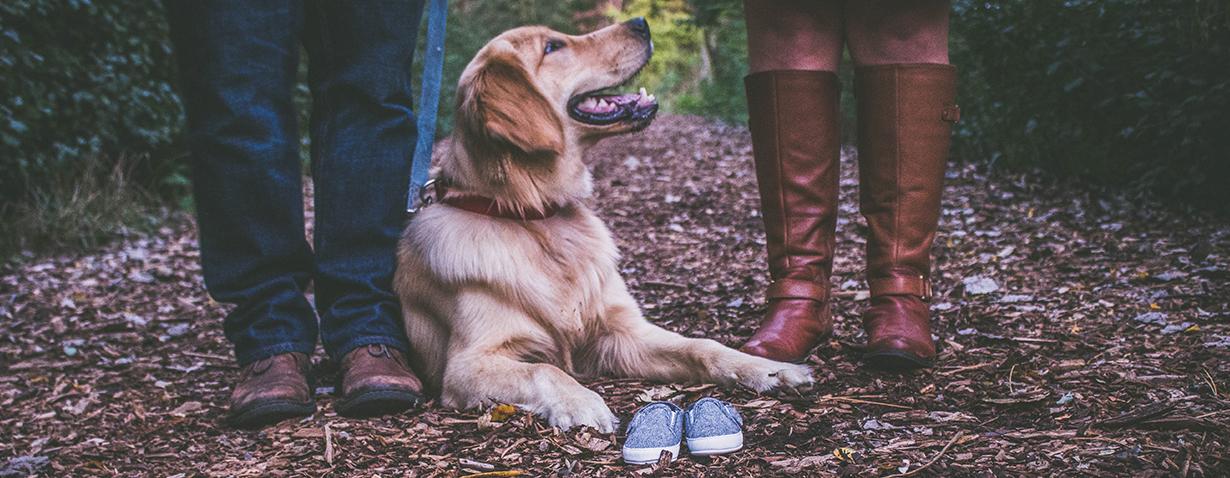 Die passende Hunderasse finden