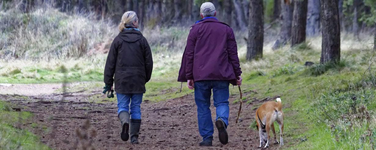 Hunderassen für Senioren