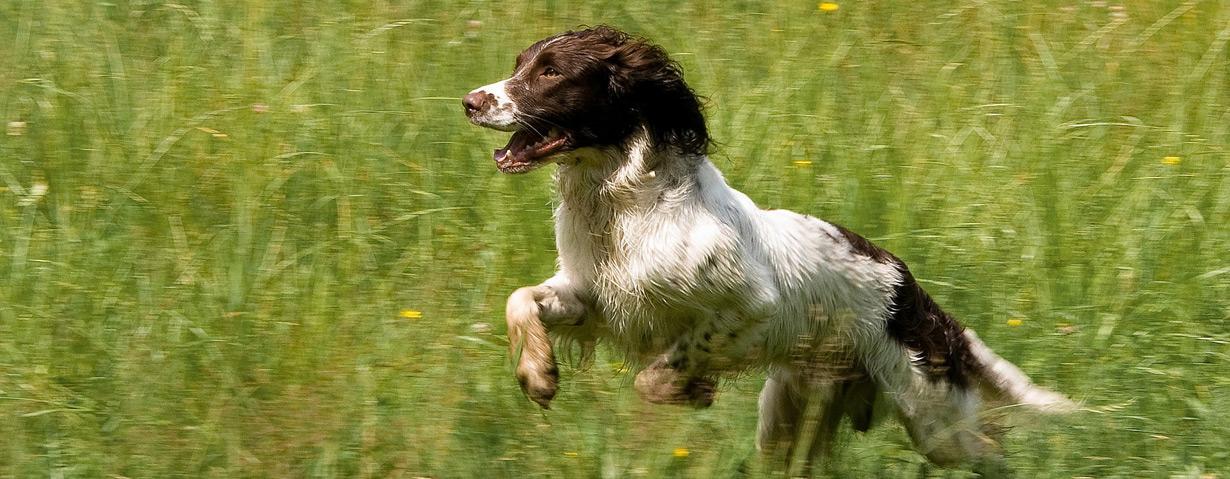 Vorteile und richtige Anwendung einer Hundepfeife