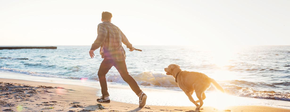 Warum ein Urlaub mit Hund in Holland wunderbar ist!