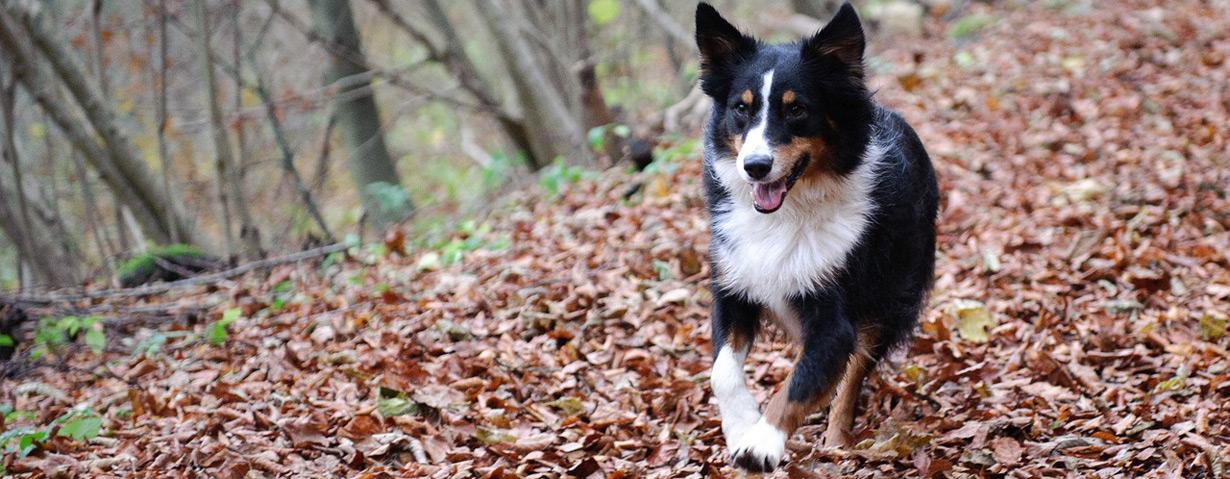 Pfotenstrecke: 10 Hunde im Herbstlaub