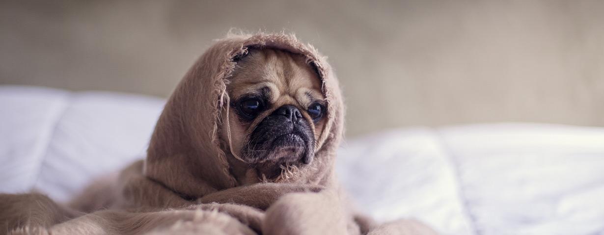 Hundewäsche pflegen