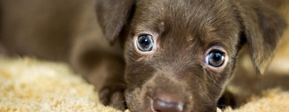 Hauptbahnhof Bonn: Projekt #PFOTE DRAUF vermittelt Tieren ein neues Zuhause