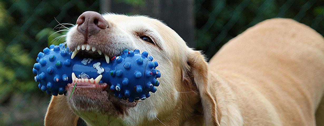 Pfotenstrecke: 10 Hunde mit ihrem Spielzeug