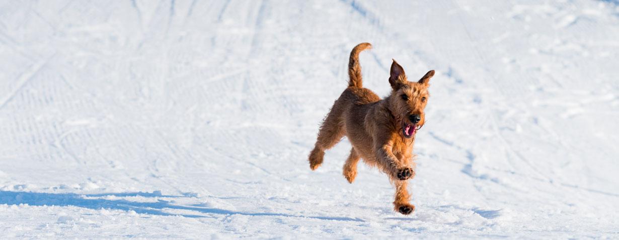 So kommt der Hund gut über den Winter