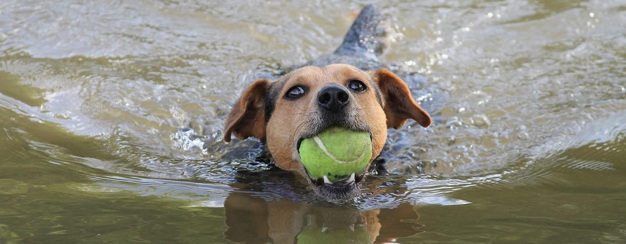 Pfotenstrecke: 10 Hunde im Wasser