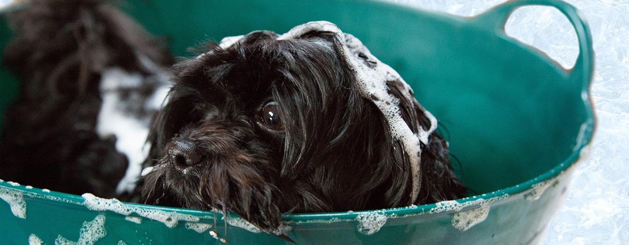 Hunde baden - Infos und Tipps