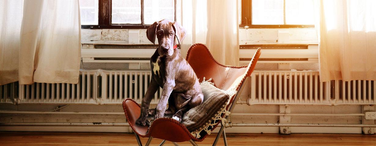 Lasst die Hunde ins Büro