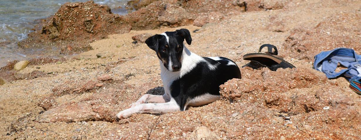 Die schönsten Reiseziele in Europa mit Hund