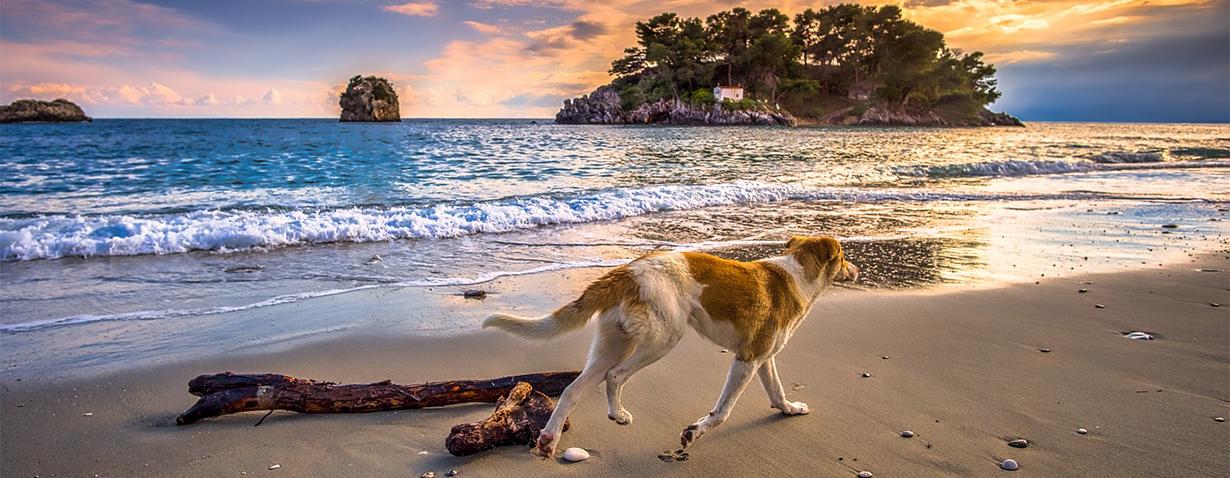 Pfotenstrecke: Hunde am Strand
