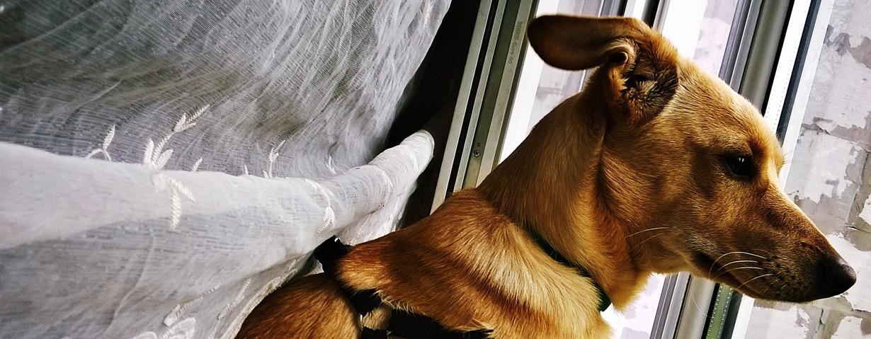 Keine Angst vor Sommergewittern: PETA gibt Haltern sensibler Hunde nützliche Tipps
