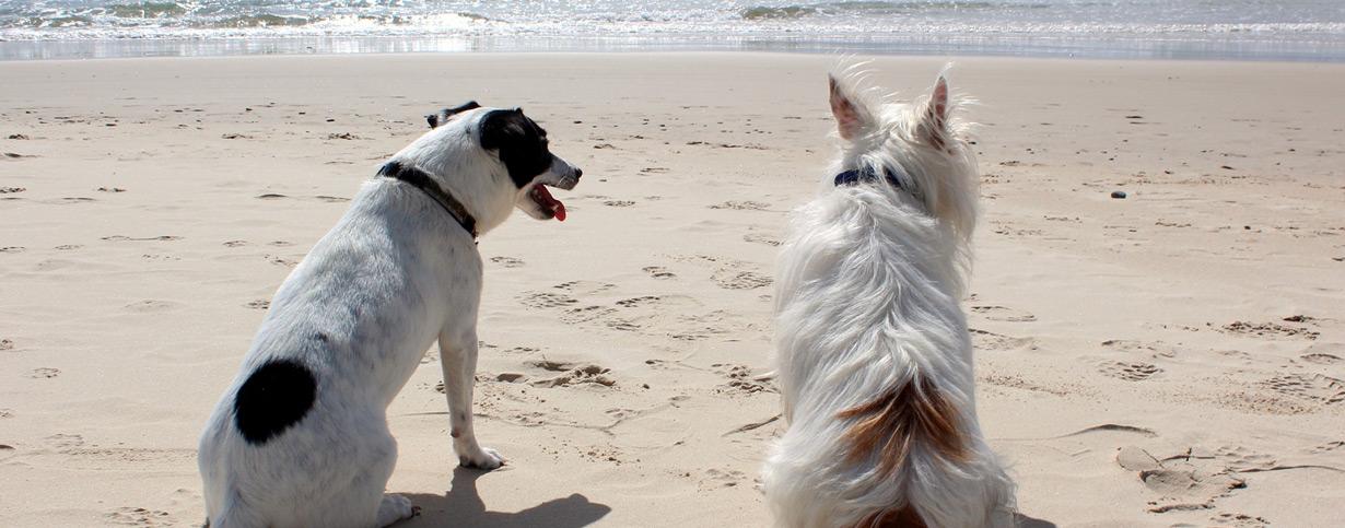 Tipps zur Reise mit dem Hund